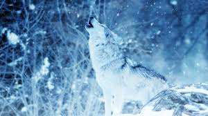 s wolf howling wallpaper