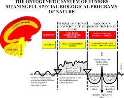 Scientific Chart Of The New Medicine At Dr Ryke Geerd Hamer