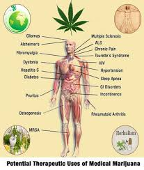 best cannabis facts images cannabis oil medical marijuana benefits infographic herb