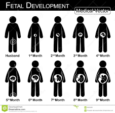 Fetal Development Pregnant Woman And Fetal Growth In Womb