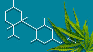 Rick Simpson Oil Dosage Chart What Is Cbd We Asked An Ex Harvard Professor To Help Us