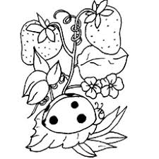 Small Picture Ladybug Coloring Pages Free Printables MomJunction