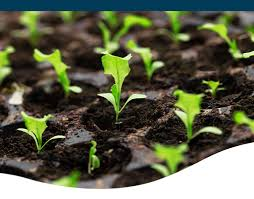 seeds 2020 iowa seed starting