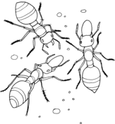 Small Picture Insect Colouring Page A Is For Ant 9 Coloring Page