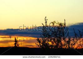 tall grass silhouette. Modren Tall Tall Grass Silhouette At Dramatic Cloudy Colorful Sunset To Silhouette