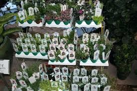 indoor fairy garden. Plants For A Fairy Garden Best Indoor Gardens .