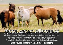 Schöne Sprüche über Pferde Wer Kennt Schöne Pferdesprüche Pferde