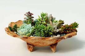 Succulent Container Garden  Gardening IdeasSucculent Container Garden Plans