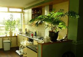 Cheap ideas for kitchen decorating, large green house plants