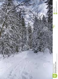 background images landscape winter.  Landscape Download Winter Nature Landscape Road In Forest  Background Stock Image  To Images Landscape E