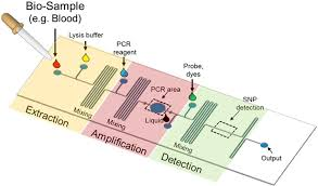 Lab On A Chip A Typical Lab On A Chip For Snp Detection Biological Samples Which