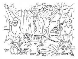 Rainforest Animals Coloring Pages Preschool