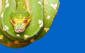 green snake wallpapers 1080p