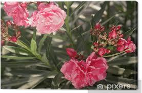 une plante Martin 25 janvier trouvée par Martine et Ajonc Images?q=tbn:ANd9GcQrylYE71zai0egobgDBLeZaZh9p7rIyvPWeg&usqp=CAU