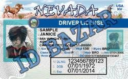 Template Nevada License Driver Psd