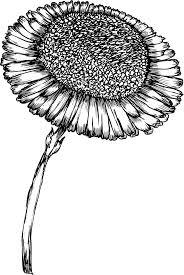 リアルな花のイラストフリー素材白黒モノクロno1979手書き風