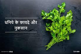 coriander dhaniya benefits and side effects in hindi धन य क फ यद और न कस न