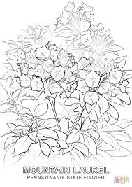 Small Picture Pennsylvania State Flower coloring page Free Printable Coloring