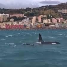 Orche a Genova, situazione drammatica: Il piccolo forse è ...