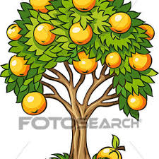 fruit tree clipart. Perfect Fruit Orange Tree Clipart Of Fruit Isolated  K10325652 Search Dinosaur And Fruit Tree Clipart
