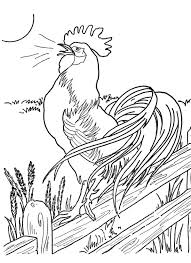 Small Picture 184 best Chicken Drawings images on Pinterest Roosters Chicken