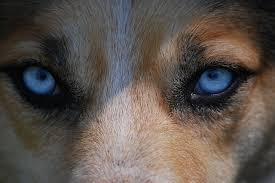 Cataratas Caninas