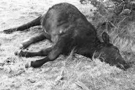 Unicorn The Shocking Truth Behind The 10000 Animal Mutilations In Americas Heartland New York Post The Shocking Truth Behind The 10000 Animal Mutilations In Americas