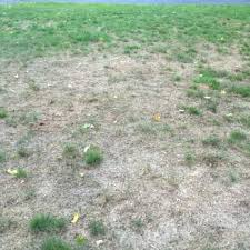 trugreen cost photo of lawn care ct united states great lawn care