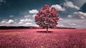 Natural scenery Wallpaper Download ...