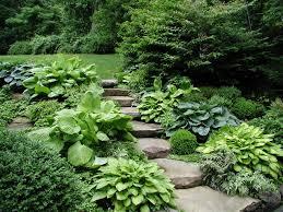 hosta alternatives for the shaded garden