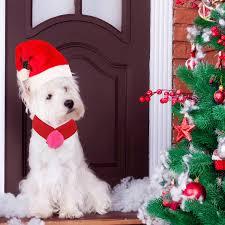 <b>Pet Christmas</b> Costumes <b>Christmas</b> Fancy Dress Clothes for Cats ...