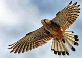 Класс птицы фото описание доклад информация сообщение общая  Класс птицы лат aves изображение