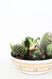 Tips to Create a Succulent Arrangement