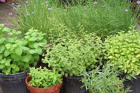 Small Picture 144 best Growing Herbs in Containers images on Pinterest Growing