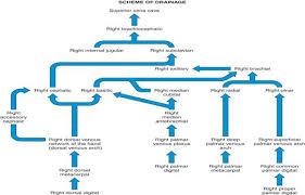 Venous Blood Flow Chart Cha 15 Tortora Blood Vessels