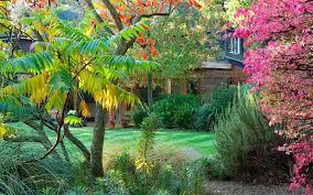 Design U0026 Decorating Surprising Good Trees For Privacy Good Trees Good Trees For Backyard