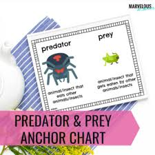 Predator Prey Anchor Charts