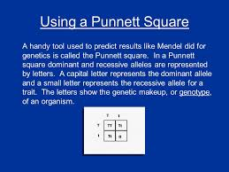 using a punnett square a handy tool used to predict results like mendel did for genetics