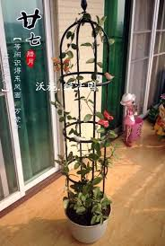 Elegant European Style Package On Clematis Vine Climbing Plants Climbing Plant Support