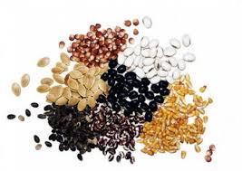 <b>Семена</b> и рассада ранних овощных культур в России. Сравнить ...