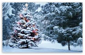 outdoor desktop backgrounds. Download Beautiful Outdoor Christmas Tree HD Wallpaper Desktop Backgrounds P