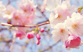 Desktop Pink Flower Wallpaper Hd ...