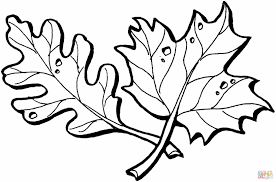 Small Picture Page At Traficboosterbiz Maple Leaf Pages Bestofcoloringcom Maple