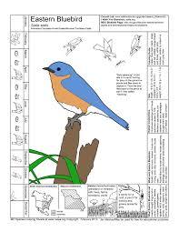 Eastern Bluebird Coloring Page Color Bros