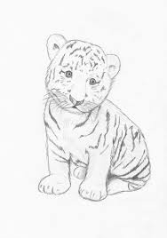 easy tiger pencil drawing. Brilliant Pencil Images For U0026gt Easy Baby Tigers Drawings Tiger Drawing Drawing Pics  And Pencil