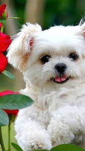 Cute White Puppies Wallpapers - Top ...