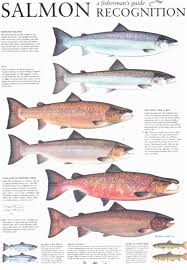 Atlantic Salmon Size Chart Dalguise Fishings Tackle Advice