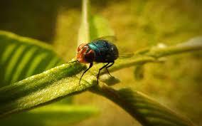 Natural Pest Elimination The Best Home Pest Control Jr
