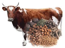 Cattle Feed Pellets Making Guide - Ecochicks Poultry Ltd - 0727087285