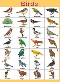 Hindi Birds Name Chart Nilesh Patil Nilesh18631 On Pinterest